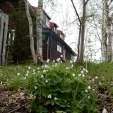 家の周りに咲く花々